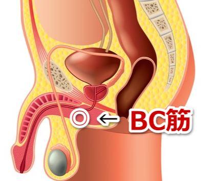 BC筋の位置