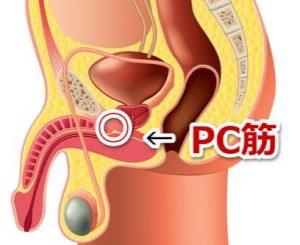 PC筋の位置