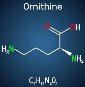 オルニチン