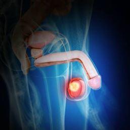 睾丸マッサージの効果