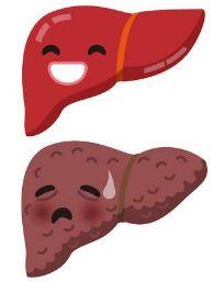 肝機能改善